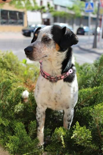 AFRODISIA, rescatada de Mairena es una perrita muy lista y que agradece como nadie cualquier gesto que se tiene con ella
